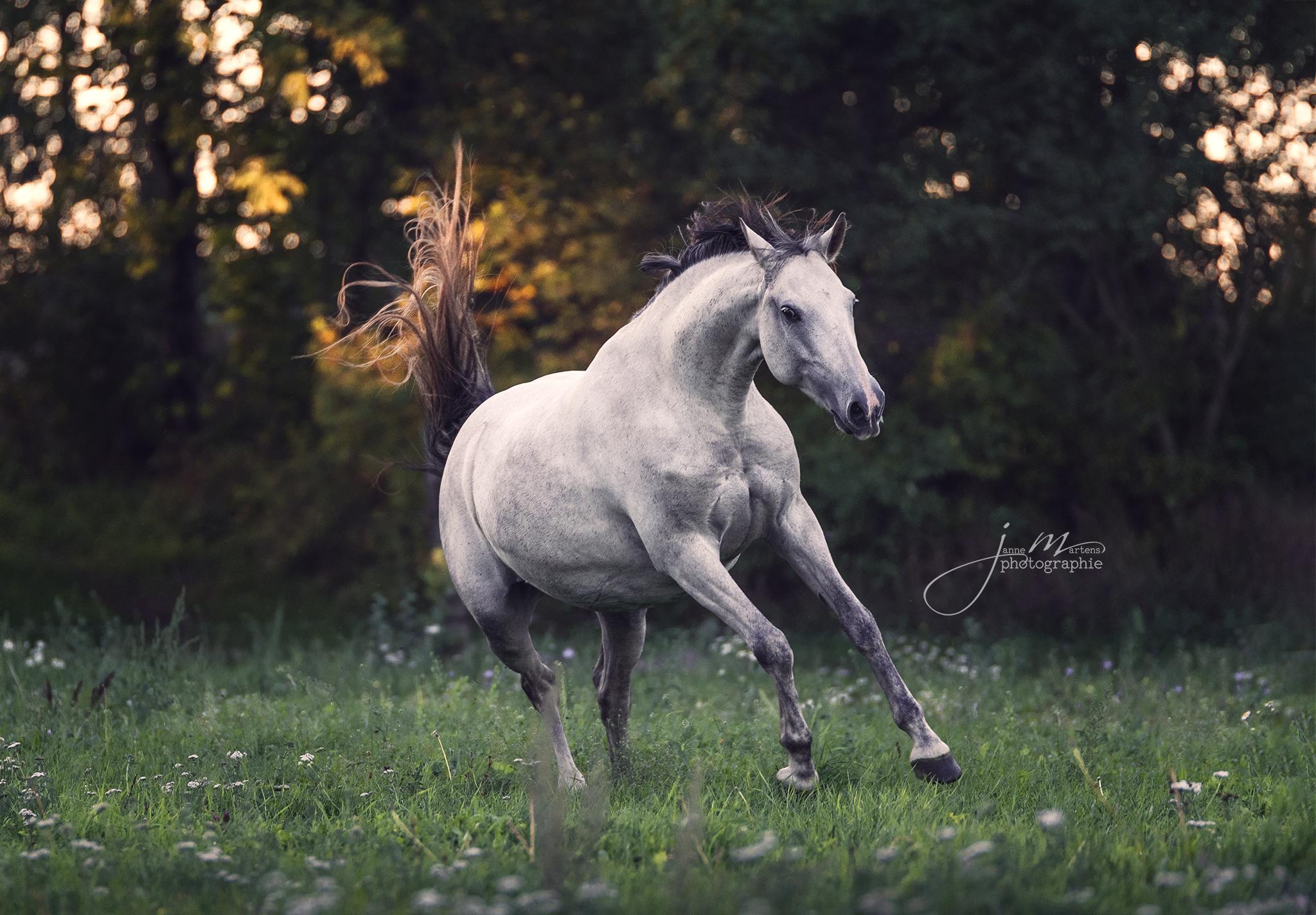 Die Bedürfnisse des Pferdes achten [2/3] – in der Fotografie